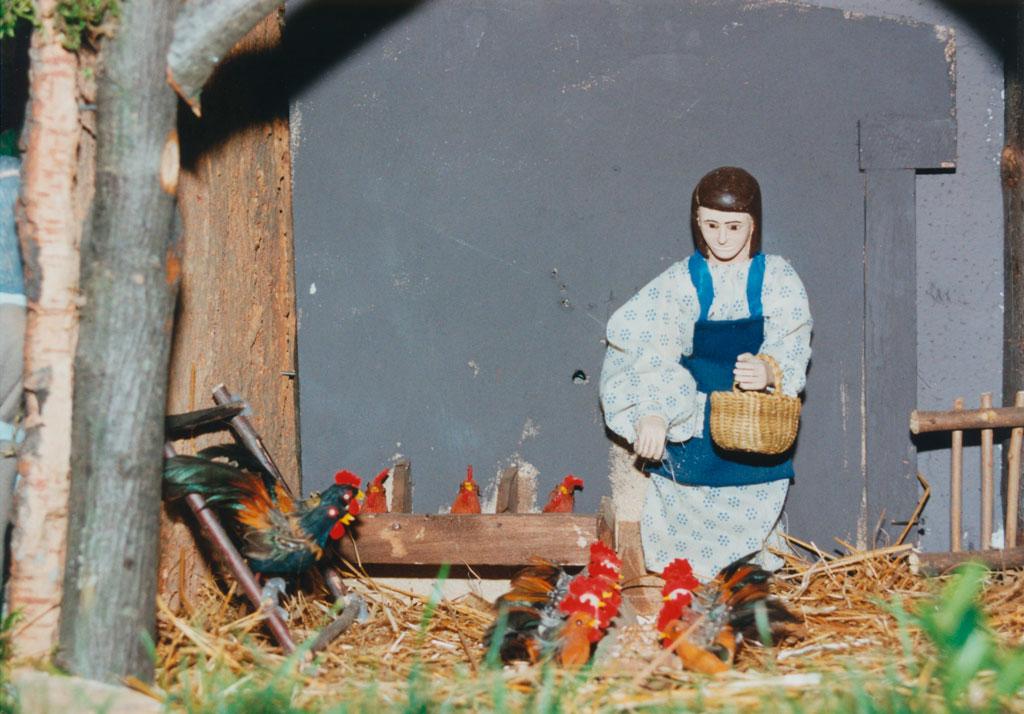 Gallinas picoteando en el gallinero.