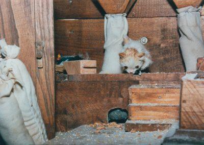 Gato y ratón en el molino.