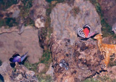 Mariposas en 2005.