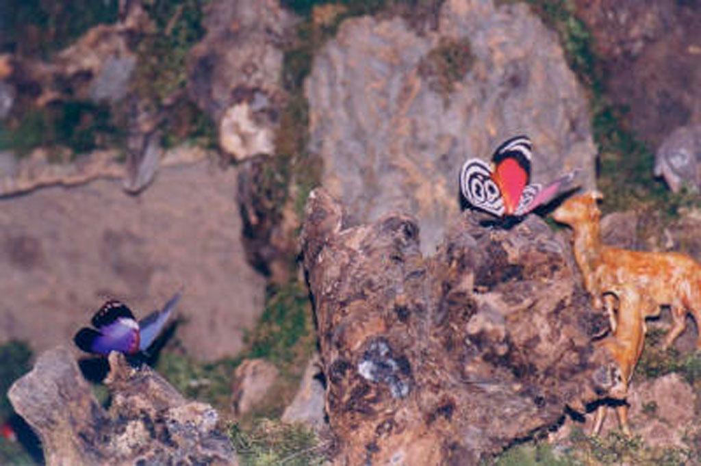 Unas mariposa en la montaña.