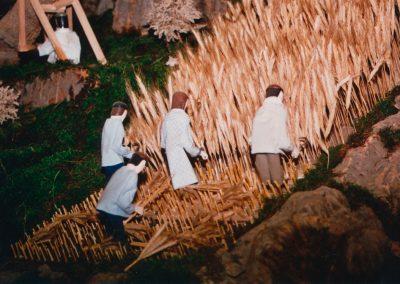 Segando el trigo en 2004.