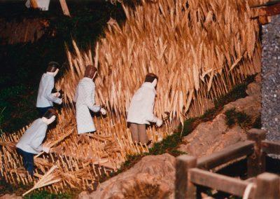 Segando el trigo en 2002.